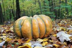 Odd Pumpkin i sidor Royaltyfri Fotografi