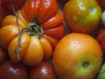 Odd Shaped Heirloom Tomatoes Freshly a lavé Photos libres de droits