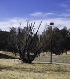Odd Shaped Tree Image stock