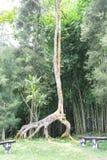 Odd Shaped Tree Photo libre de droits