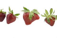 Odd Strawberries Royalty Free Stock Photography