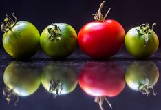 Odd Tomato Out lizenzfreie stockbilder