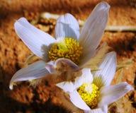 Odd White Flower in een Tuin bij het Park royalty-vrije stock foto's