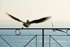 oddalony latający seagull obraz royalty free