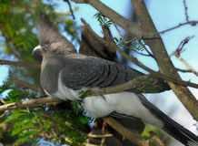 oddalony ptak idzie biel Zdjęcia Royalty Free