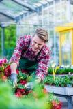 Oddana kwiaciarnia podczas pracy w nowożytnym kwiatu sklepie zdjęcie stock