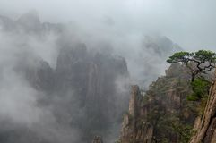 Oddly-shaped pine on a rock wall on a foggy day, Huangshan Mount stock photography