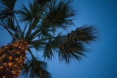 Oddolny kąta widok drzewko palmowe pod niebieskim niebem Kablowa Druciana Wisząca depresja Pod liśćmi Malutki DOWODZONY świateł P zdjęcia royalty free