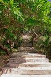 Oddolny przez dżungli obraz royalty free