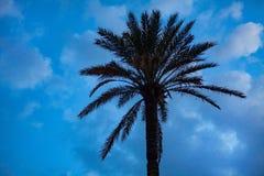 Oddolny strzał Wysoki drzewko palmowe pod niebieskim niebem Malutcy DOWODZENI światła Połyskuje wokoło bagażnika Kablowa Druciana zdjęcia stock
