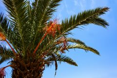 Oddolny strzał Wysoki drzewko palmowe pod niebieskim niebem Malutcy DOWODZENI światła Połyskuje wokoło bagażnika Kablowa Druciana zdjęcia royalty free