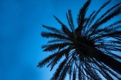 Oddolny strzał Wysoki drzewko palmowe pod niebieskim niebem Malutcy DOWODZENI światła Połyskuje wokoło bagażnika Kablowa Druciana zdjęcie stock