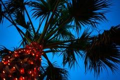 Oddolny strzał Wysoki drzewko palmowe pod niebieskim niebem Malutcy DOWODZENI światła Połyskuje wokoło bagażnika Kablowa Druciana obraz stock