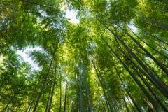Oddolny widok bambusowy las zdjęcia royalty free