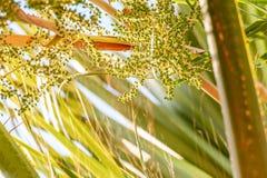 Oddolny widok drzewko palmowe zdjęcie royalty free