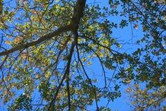 ODDOLNY widok drzewo Z ulistnieniem PRZECIW niebieskiemu niebu obraz stock