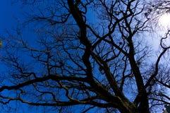 Oddolny widok jałowego wiosna warkocza kąta fisheye szeroki obiektyw fotografia stock
