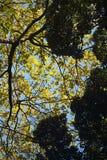 ODDOLNY widok JASKRAWY - zieleń OPUSZCZA NA gałąź Z światłem słonecznym DALEJ Z CIEMNOZIELONYM ulistnieniem W przedpolu fotografia royalty free