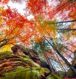 Oddolny widok kolorowi jesieni drzewa w lesie zdjęcie stock