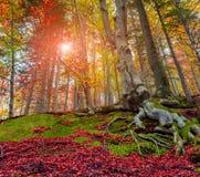 Oddolny widok kolorowi jesieni drzewa w lesie obrazy stock