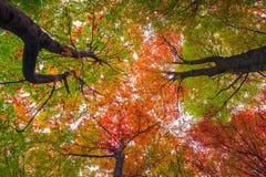 Oddolny widok kolorowi jesieni drzewa w lesie obrazy royalty free