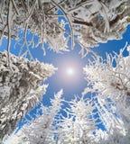 Oddolny widok niebo w śnieżnym lesie zdjęcie stock