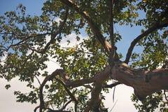 ODDOLNY widok W drzewo Z COLOURED barkentyną I SILNĄ gałąź obrazy royalty free