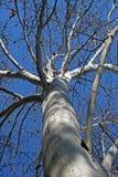 ODDOLNY widok W PŁASKIEGO drzewo obrazy stock