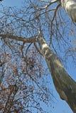 ODDOLNY widok W PŁASKIEGO drzewo Z gałąź zdjęcie stock