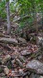 Oddolny widok zakrywający w spadać skałach mała ścieżka zdjęcie stock