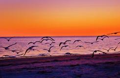 Oddychać w pięknie magiczny życie Fotografia Stock