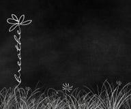 Oddycha tekst stokrotki w trawie Zdjęcie Stock