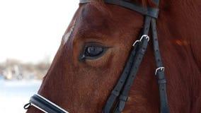 Oddychanie czarny koń w zimie swobodny ruch zdjęcie wideo
