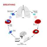 Oddychanie lub oddychanie Zdjęcie Stock