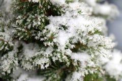 oddział objętych śnieg Zdjęcia Royalty Free