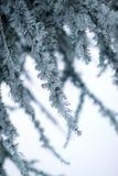 oddział objętych śnieg Obrazy Royalty Free
