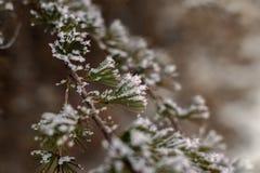 oddział objętych śnieg Zdjęcie Royalty Free