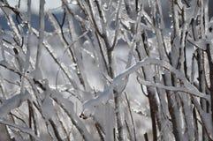 oddział objętych śnieg Zdjęcie Stock