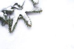 oddział obramiają sosnowego śnieg Fotografia Royalty Free