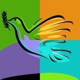 oddział olive gołębie Zdjęcie Stock