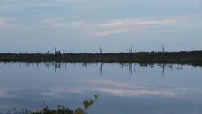 Oddziela suchych drzewa na brzeg lasowy jezioro w opóźnionym wieczór zbiory