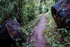 Oddzielne bele szalunek, połówka brown drewno na sposobie w wilgotnym lesie obraz royalty free