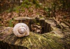 Ode till fotoet för materiel för Fibonacci slut det övre av ett enkelt tomt snigelskalanseende på ett hinder i skogen Royaltyfri Bild