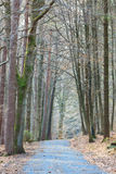 Odenwald forest at spring Royalty Free Stock Photos