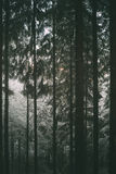 Odenwald forest in winter Stock Photo