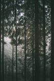 Odenwald las w zimie Zdjęcie Stock