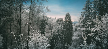 Odenwald skog i vinter Royaltyfria Bilder