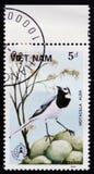 Oder weiße Bachstelze des Motacilla alba, circa 1986 Lizenzfreies Stockbild