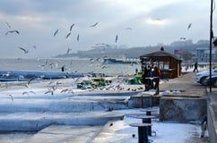 Odessa, de winter, vorst - de mensen voeden vogels royalty-vrije stock fotografie