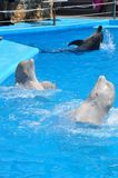 Odessa dolphinarium Nemo holds an unusually wonderful show with dolphins. Royalty Free Stock Images